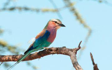 birds_of_ruaha