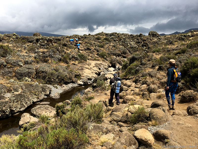 """The Machame route; well known as the """"Whiskey Route"""" begin in the south of the mountain. It is the most-travelled route on Kilimanjaro taking more than [themify_button bgcolor=""""green"""" size=""""large"""" link=""""https://trekandhideadventures.com/machame-7d/"""" style=""""button""""]Read More[/themify_button]"""