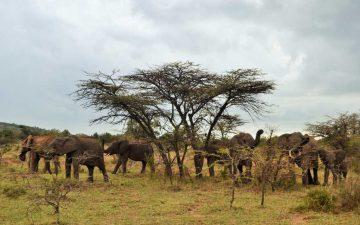 Masai-Mara-Day-1-1024x683