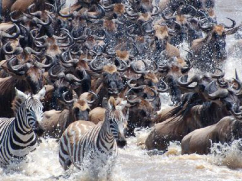 """[themify_button bgcolor=""""green"""" size=""""small"""" link=""""https://trekandhideadventures.com/6-day-safari-tarangire-np-serengeti-ngorongoro-crater/"""" style=""""button""""]Detailed Itinerary[/themify_button]"""