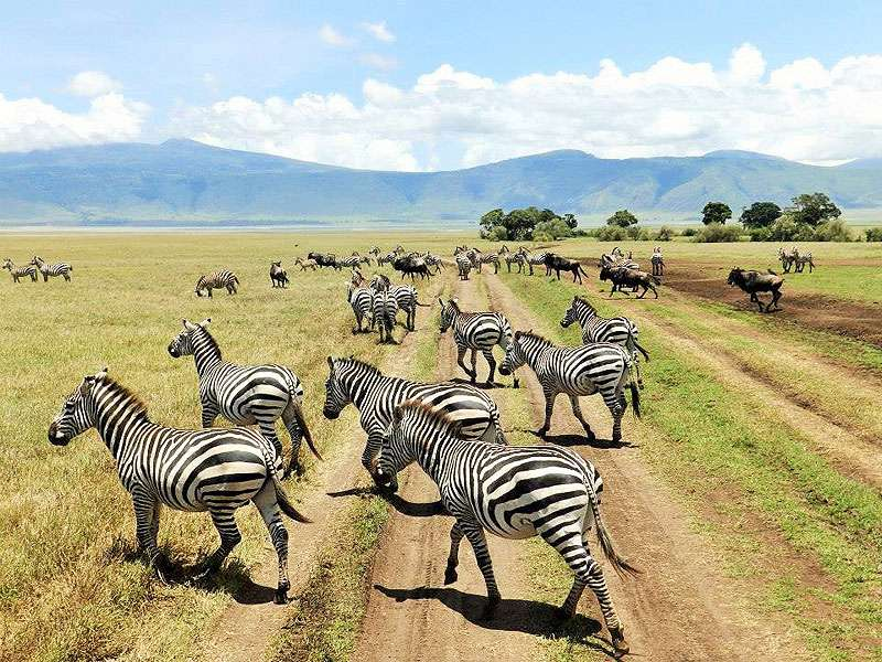 """[themify_button bgcolor=""""green"""" size=""""small"""" link=""""https://trekandhideadventures.com/4-day-safari-tarangire-np-ngorongoro-crater-serengeti/"""" style=""""button""""]Detailed Itinerary[/themify_button]"""