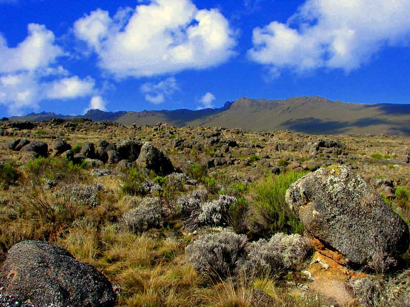 """The Marangu route nicknamed """"Coca Cola Route"""" begins in the eastern side of the mountain. It is the easiest of the Kilimanjaro routes (with about 29% ... [themify_button bgcolor=""""green"""" size=""""large"""" link=""""https://trekandhideadventures.com/marangu-6-days/"""" style=""""button""""]Read More[/themify_button]"""
