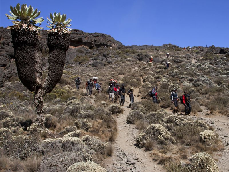 """The Marangu route nicknamed """"Coca Cola Route"""" begins in the eastern side of the mountain. It is the easiest of the Kilimanjaro routes (with about 29% ...[themify_button bgcolor=""""green"""" size=""""large"""" link=""""https://trekandhideadventures.com/marangu-5-days/"""" style=""""button""""]Read More[/themify_button]"""