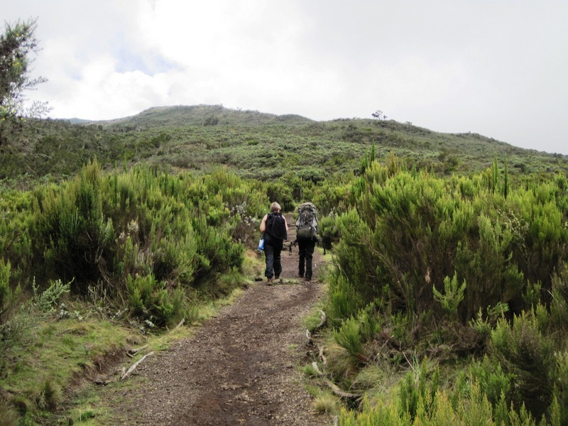 """The Shira route is practically identical to the Lemosho route. Whereas Lemosho Route starts at the Glades (rain forest zone)... [themify_button bgcolor=""""green"""" size=""""large"""" link=""""https://trekandhideadventures.com/shira-route/"""" style=""""button""""]Read More[/themify_button]"""