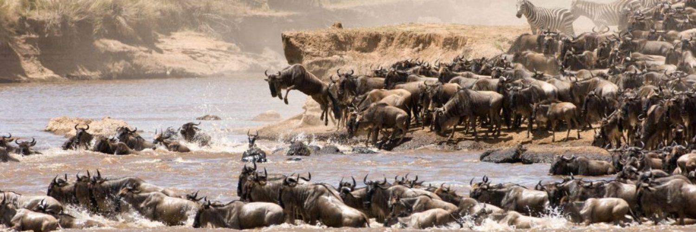 Wildlife Safaris FAQs